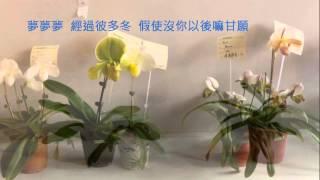 音樂磁場-心愛的人, 2015蘭展 仙履蘭 -Orchid 1/5 , Taiwan