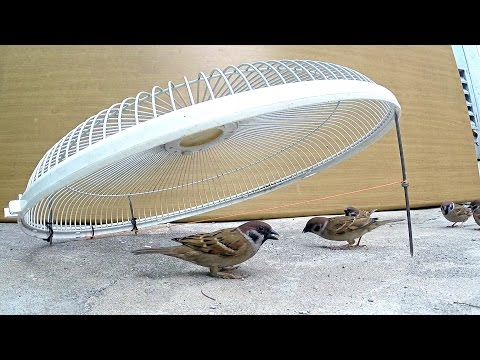 Electric fan guard bird trap