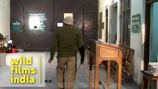 Tihar Jail attendance and roll-call