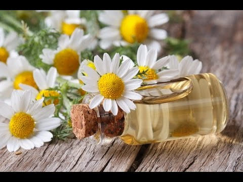 Chamomile Oil For Cancer, Stress, Anxiety, Insomnia, PMS, Injury, PTSD & Temper Tantrum