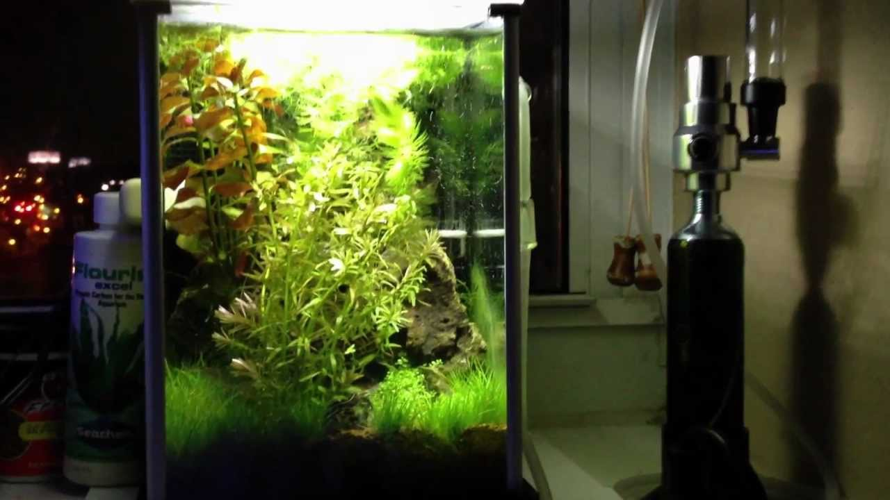 TBMu0027s Hi Tech Fluval Spec Jungle Ruin Aquascape With CO2   YouTube