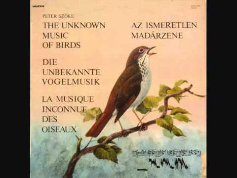 The true Music of Birds