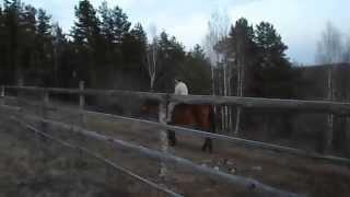 верхом на лошади без амуниции