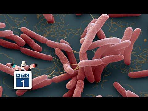 """Quảng Bình: Xuất hiện """"vi khuẩn ăn thịt người"""" là bịa đặt"""
