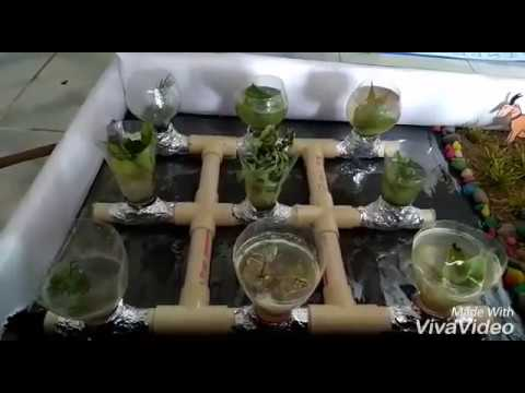 science working model on resource management and food security Hydroponics by muskan & shyam