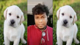 Dog Meat Caught In Chennai Egmore Railway Station