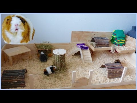 New DIY Guinea Pig Cage Tour