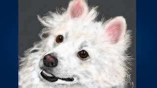 Американский эскимосский шпиц (American eskimo dog)