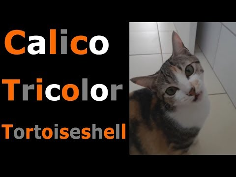 Calico, Tortoiseshell and Tricolor Cats --- CAT COMPILATION