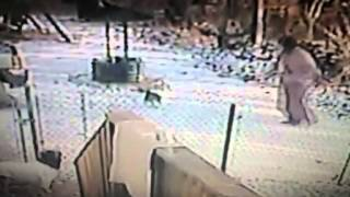 Viewer Video: Cat attacks woman in the snow