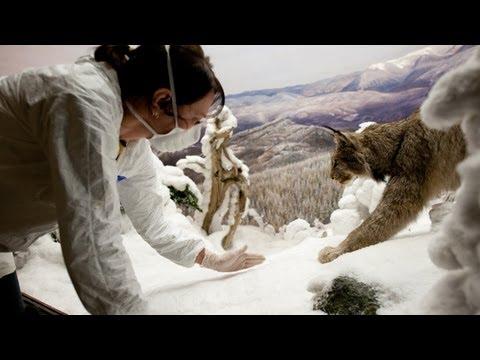 "Replacing ""Snow"" in the Dioramas"
