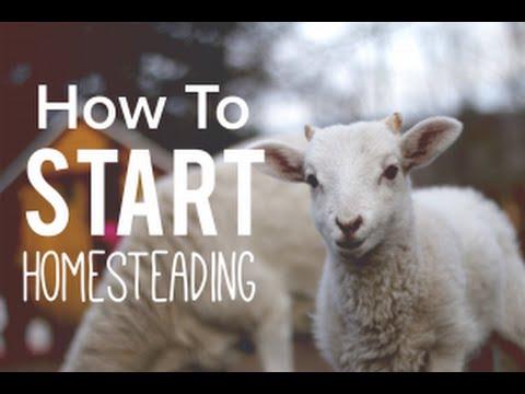 How To Start Homesteading