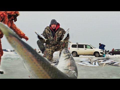 День КОГДА ПРИШЛА РЫБА! Рыбалка зимой на САМОДУР с бородой. Клюет одна за одной!