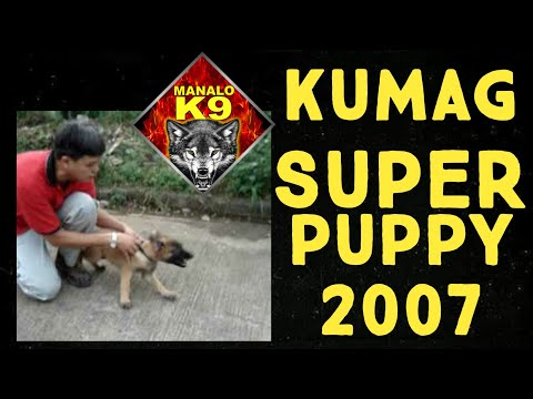 MANALO K9's 'KUMAG' as a puppy (VINTAGE VIDEO)(now known as Sonny Matias' Diego MR-2 Champ)