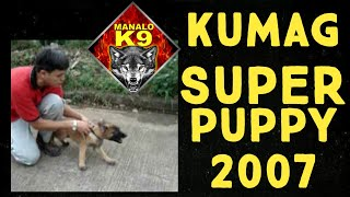 "Manalo K9's ""kumag"" As A Puppy (vintage Video)(now Known As Sonny Matias' Diego Mr-2 Champ)"