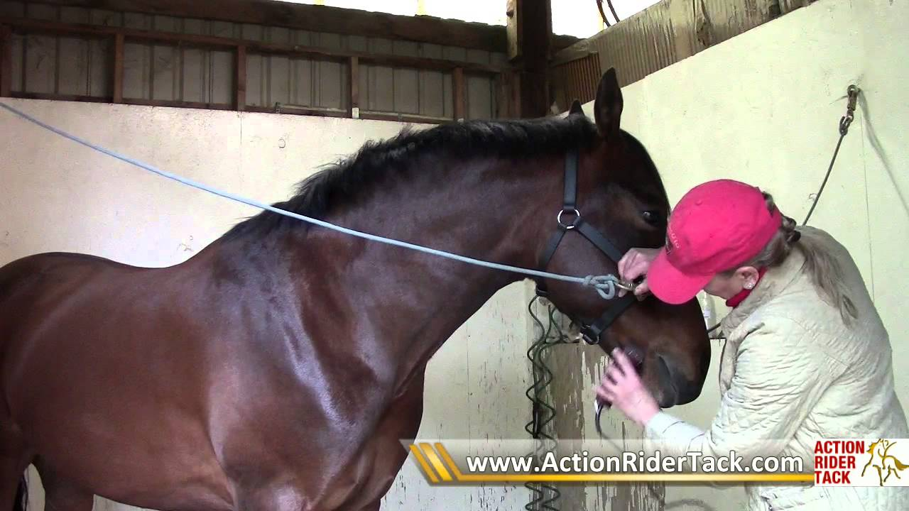 How to Clip Your Horse recommendations