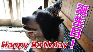 我が家の癒し系愛犬ハリーくん2018年10月19日で11歳になりました。 用意...