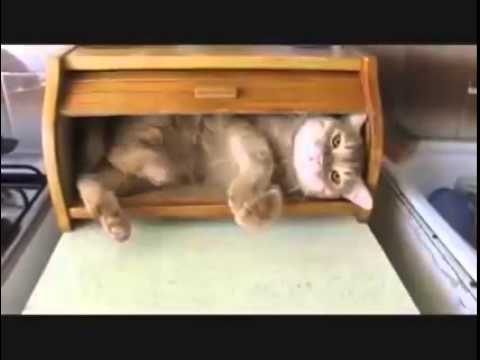 Cat In A Bread Box Interesting This Cat Is Comfortable In His Bread Bin YouTube