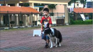 Dog Training - Singapore Youngest Dog Trainer