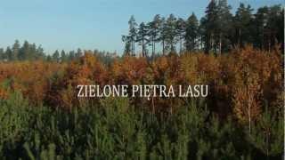 Trailer ZIELONE PIETRA LASU format HD