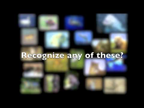 Endangered/extinct animals (personal project - Natascha)