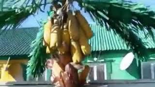 «Тропический сад» появился на трассе по пути из Владивостока в Арсеньев