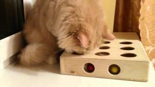 Іграшка для котів - коробка з кульками. Cats Peek-and-Play toy box.
