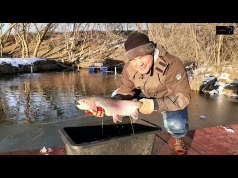 Платная рыбалка в матвеевском
