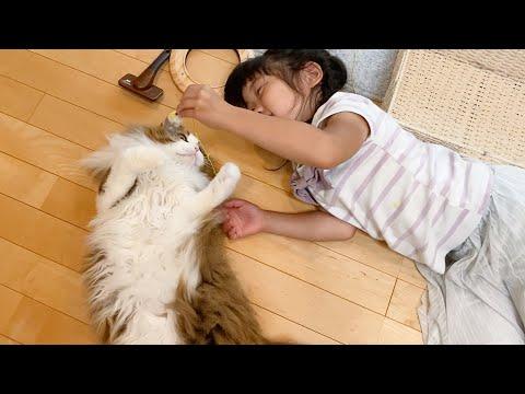 娘と遊ぶと飽きた猫じゃらしでも夢中になっちゃう猫
