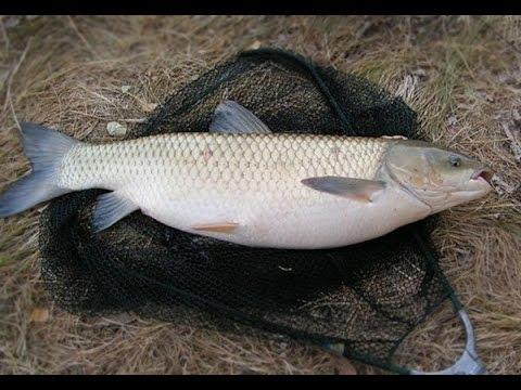 Рыбалка в Красносельском.