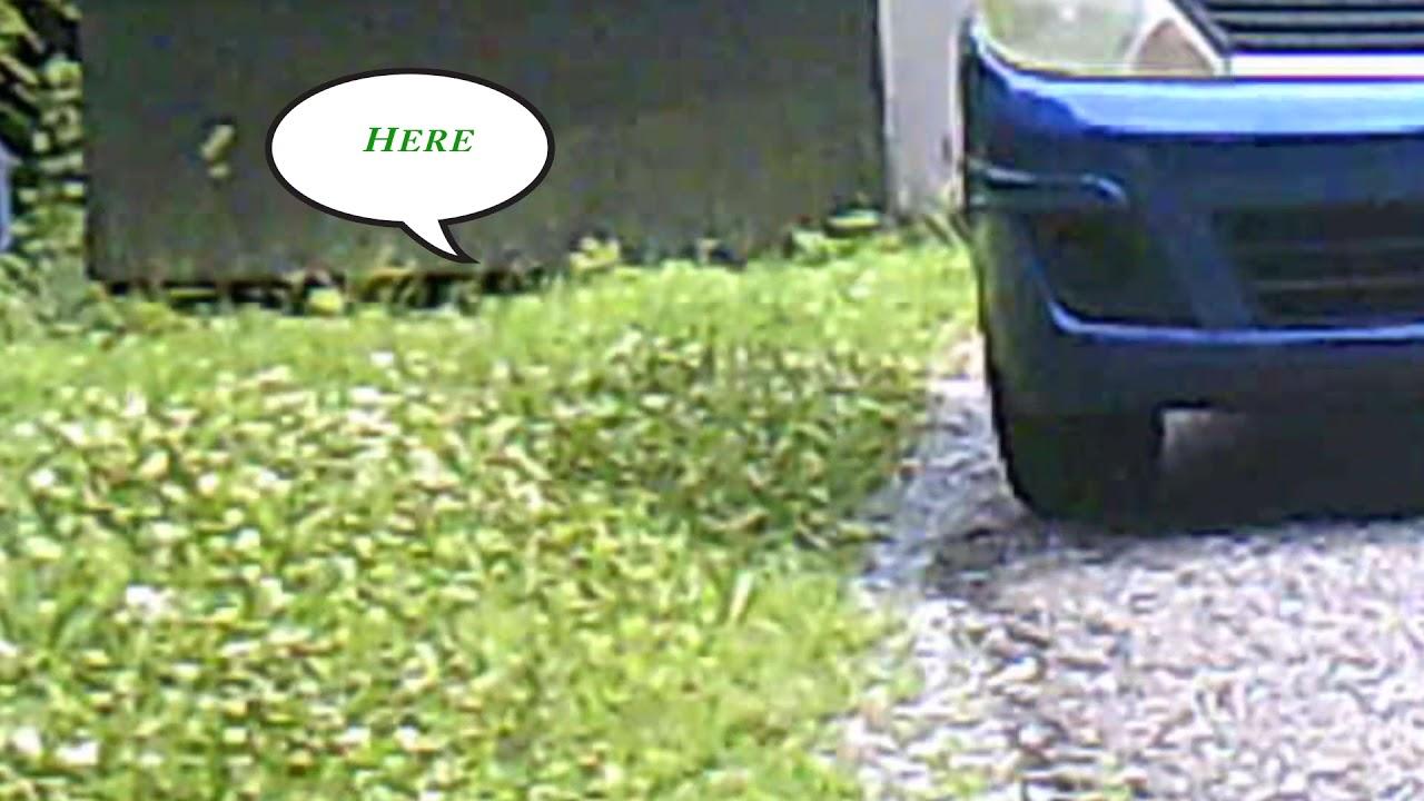 Groundhog in the backyard. - YouTube