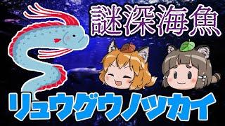 【ゆっくり解説】幻の深海魚?リュウグウノツカイ【へんないきもの#38】