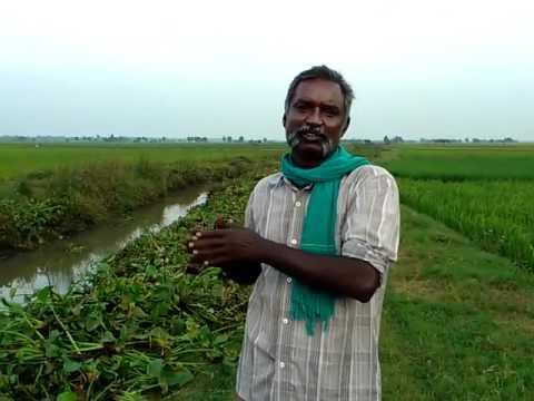 Thiru.C.Karikalan Part 10  Degradation of Cauvery delta indigenous animals