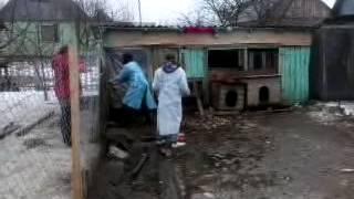 Волонтёры Гомеля, бездомные животные