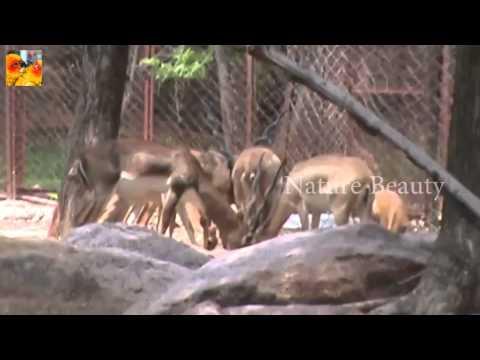 deers-world-amazing-wild-view
