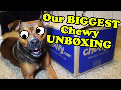 chewy-haul-dog-toys-unboxing-video---dog-toy-reviews-|-kong,-nylabone,-jw,-outward-hound,-jolly-pets