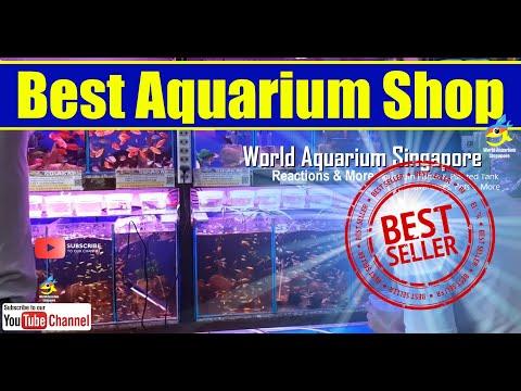 Best Aquarium Fish Shop - Clementi Florist And Aquarium Shop - Aquarium Shop Singapore