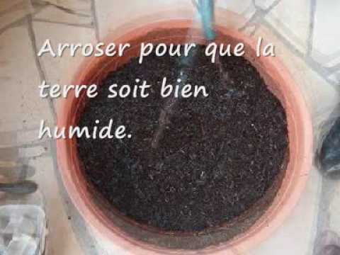 Faire pousser des pommes de terre dans un pot youtube - Planter pomme de terre en pot ...