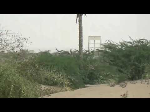 مليشيات الحوثي تستحدث مواقع عسكرية في منازل المواطنين| حيس