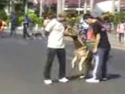 Anjing Menyerang Budak Secara Tiba Tiba Doovi