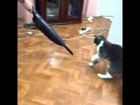 Vacuum cleaner fight