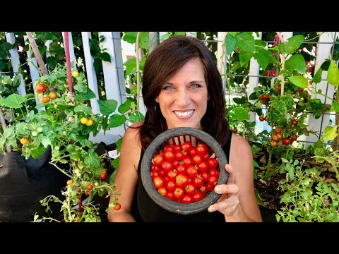 🍅 LIVE: 4 of my Favorite Summer Garden Tips, Q & A (REPLAY)