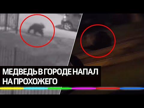 Как очистилась природа: медведь напал на прохожего в центре Ярославля