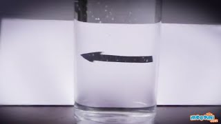 Refraction of Light in Water - Cool Science Experiment | Mocomi Kids