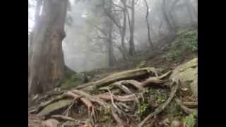 Mt. SASAYAMA 四国アルプス最西端の里山・篠山