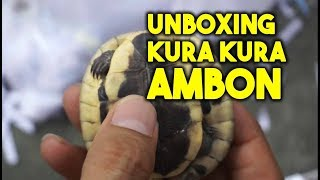Video Unboxing Kura Kura ambon