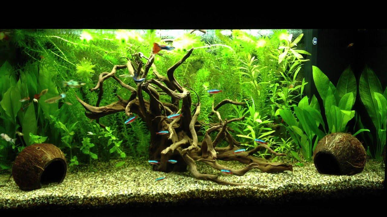 Decoration Aquarium Noix De Coco : Minutes de paix hd youtube