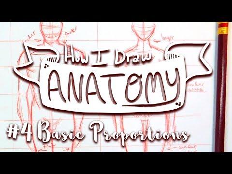 how-i-draw-anatomy-#4:-basic-proportions---misskerriej--