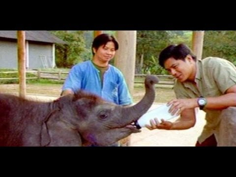 Born to be Wild: Chiang Mais elephant sanctuary