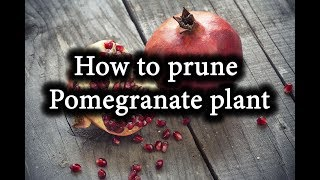 How to form Pomegranate Bush. Prune Pomegranate Tree correctly.